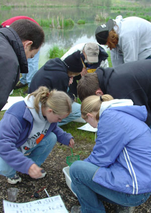 Students studying macroinvertebrates at a pond