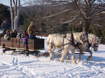 Horse drawn sleigh ride at the KVR Winterfest