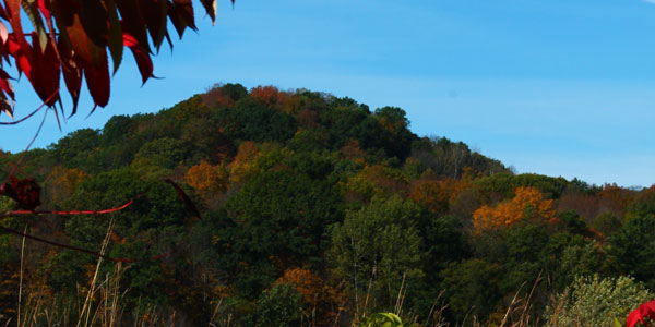A hillside showing the start of changing leaves
